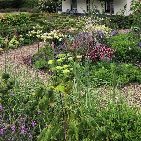 Beplantingsplan Laten Maken Dutch Quality Gardens 14 Min