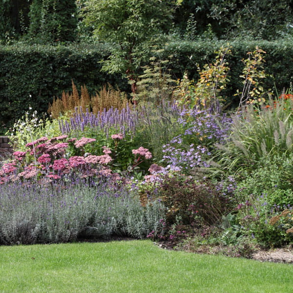 Beplantingsplan Laten Maken Dutch Quality Gardens 18 Min
