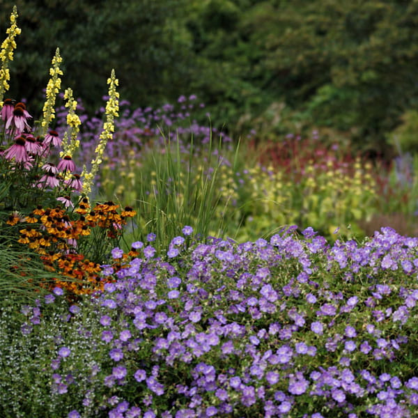 Beplantingsplan Laten Maken Dutch Quality Gardens 3 Min