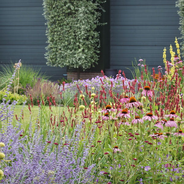 Beplantingsplan Laten Maken Dutch Quality Gardens 4 Min