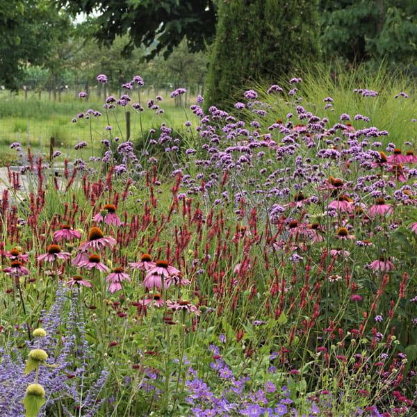Beplantingsplan Laten Maken Dutch Quality Gardens 5 Min