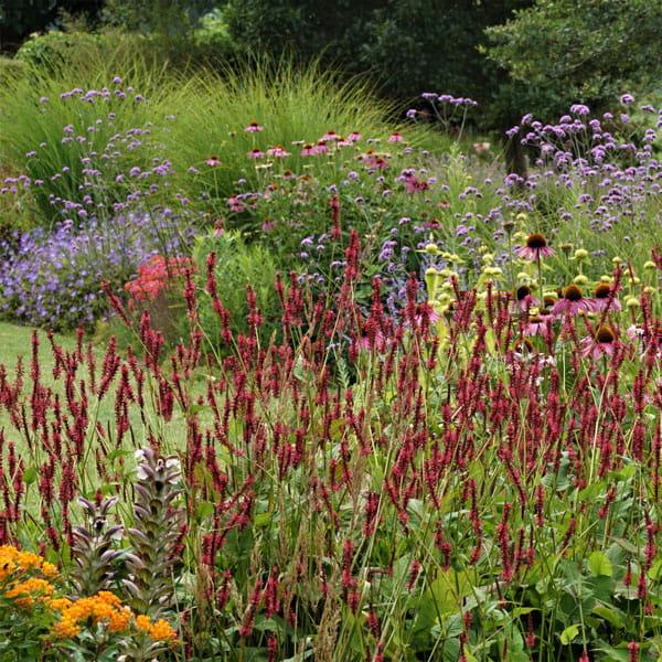 Beplantingsplan Laten Maken Dutch Quality Gardens 6 Min