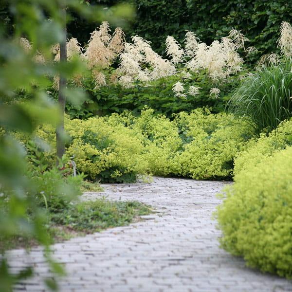 Beplantingsplan Laten Maken Dutch Quality Gardens 7 Min