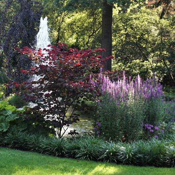 Beplantingsplan Laten Maken Dutch Quality Gardens 8 Min