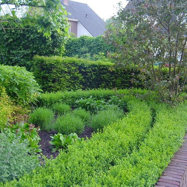 Voortuin Laten Ontwerpen Door Dutch Quality Gardens 9