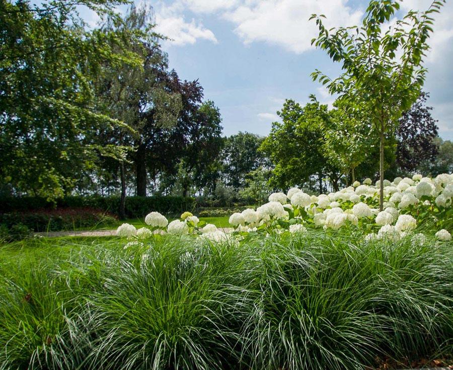 Aandachtig Genieten Dutch Quality Gardens 6