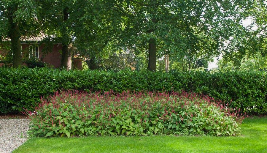 Aandachtig Genieten Dutch Quality Gardens 8