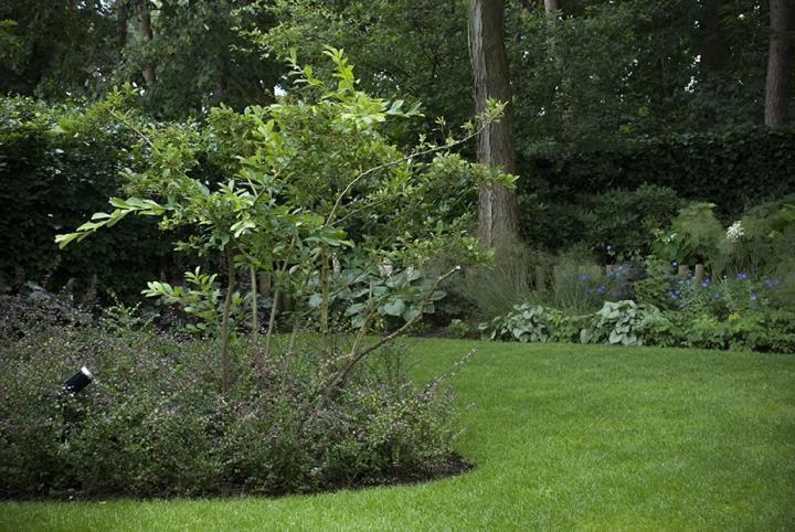 Moderne Bosaangrenzende Tuin Dutch Quality Gardens 2