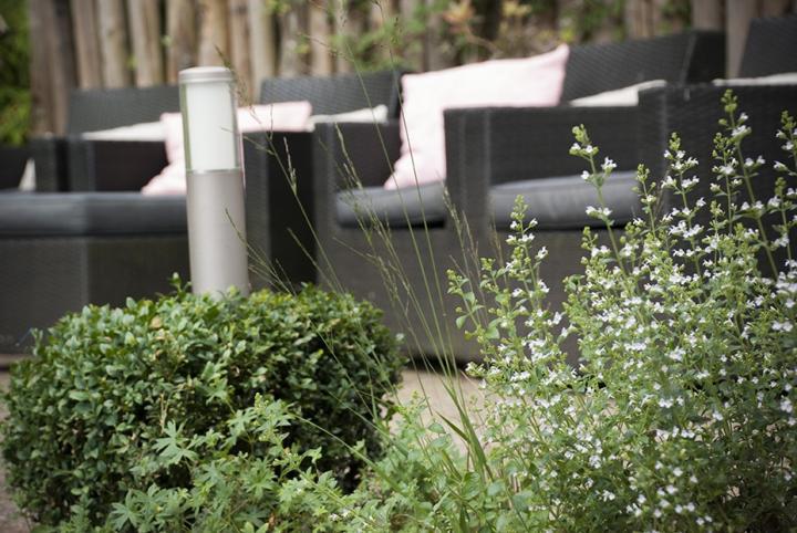 Moderne Bosaangrenzende Tuin Dutch Quality Gardens 4