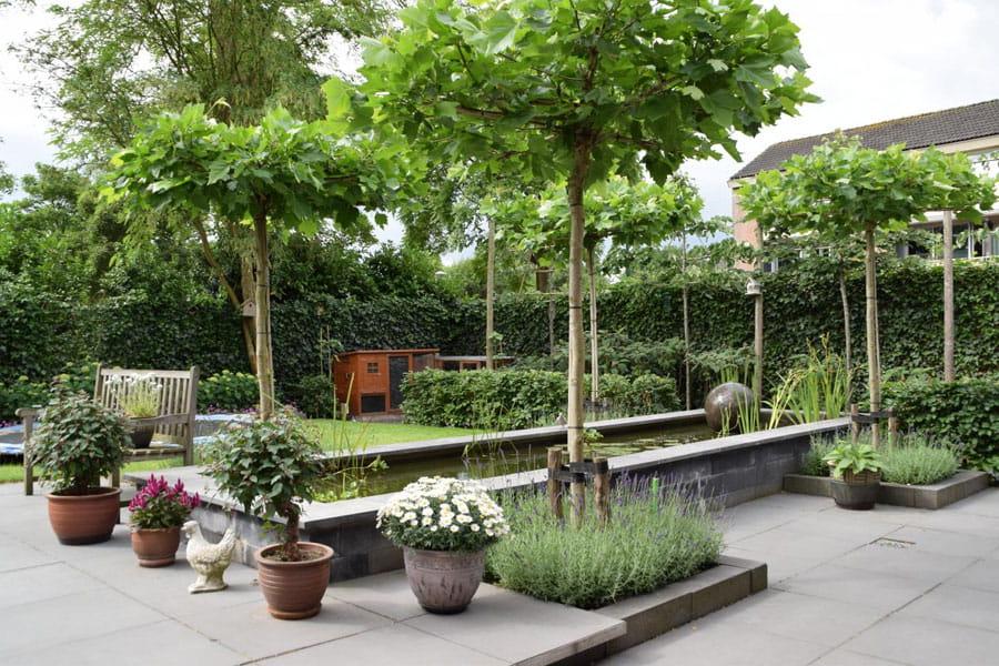 Uitzicht Op De Vijver Dutch Quality Gardens 3