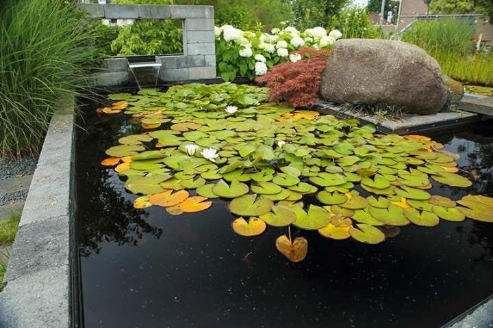 Veel Om Van Te Genieten Dutch Quality Gardens 7