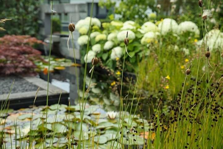 Veel Om Van Te Genieten Dutch Quality Gardens 8
