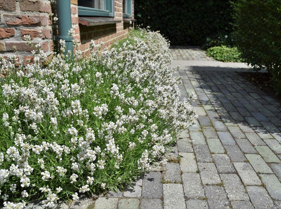 Vijver Als Verbinding Dutch Quality Gardens 3
