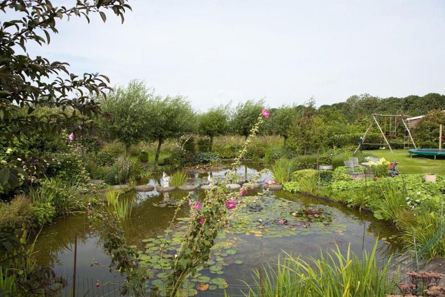 Vijvertuin Dutch Quality Gardens 1