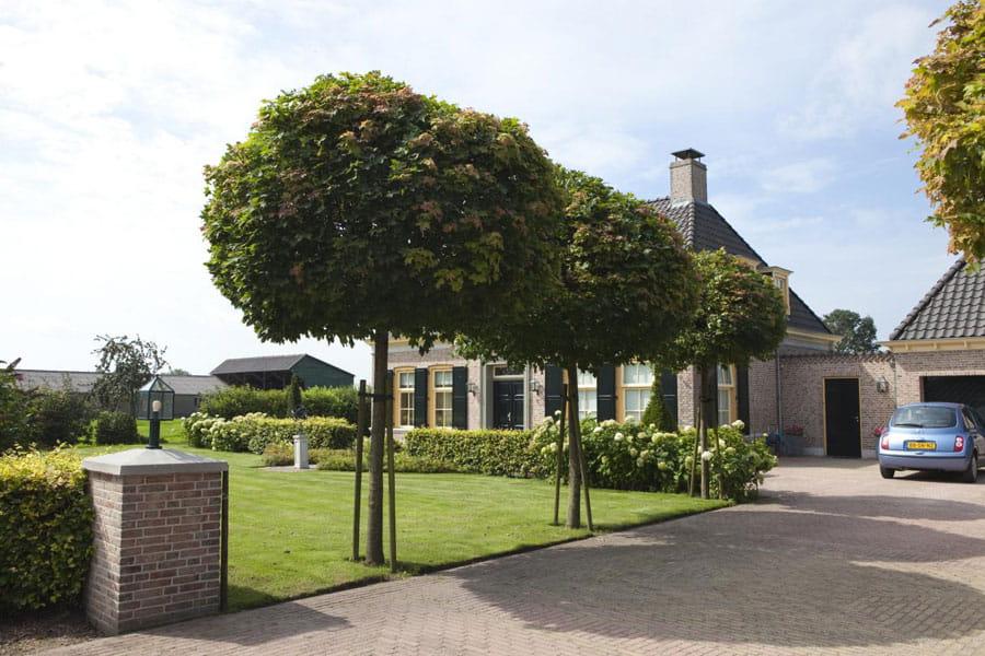 Vijvertuin Dutch Quality Gardens 7