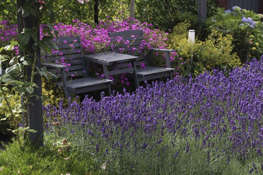 Landelijke Tuin Steenbergen Dutch Quality Gardens 2