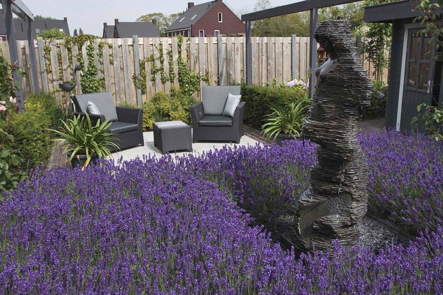 Landelijke Tuin Steenbergen Dutch Quality Gardens 4