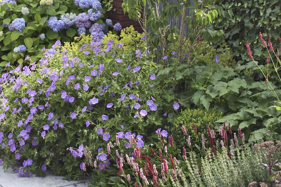 Landelijke Tuin Steenbergen Dutch Quality Gardens 5