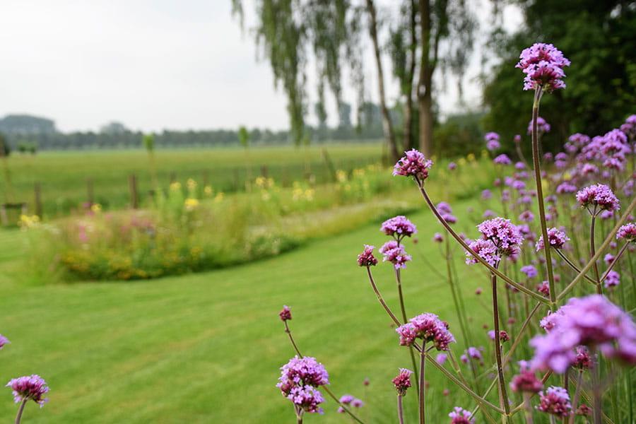 Dutch Quality Gardens Mocking Hoveniers Moderne Tuin Foto 14 Min