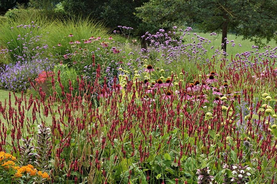Dutch Quality Gardens Van Ooijens Hoveniers Kleurrijke Tuin Foto 4 Min