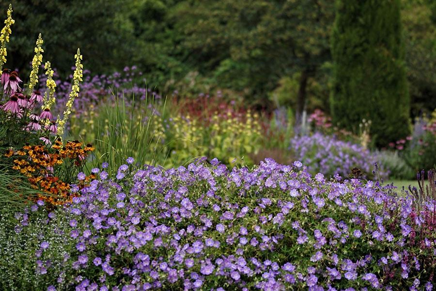 Dutch Quality Gardens Van Ooijens Hoveniers Kleurrijke Tuin Foto 5 Min