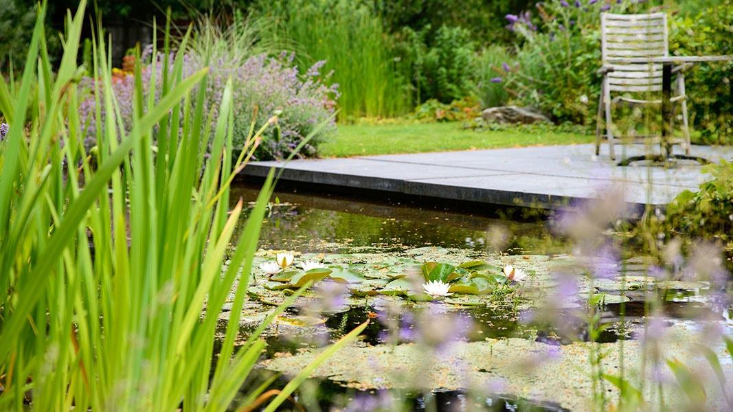 Dutch Quality Gardens Visio Vireo Harmonieuze Bloemtuin In Hoogerheide 1