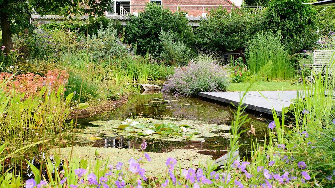 Dutch Quality Gardens Visio Vireo Harmonieuze Bloemtuin In Hoogerheide 2