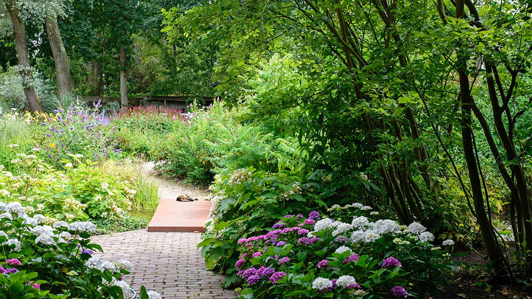Dutch Quality Gardens Visio Vireo Harmonieuze Bloemtuin In Hoogerheide 3