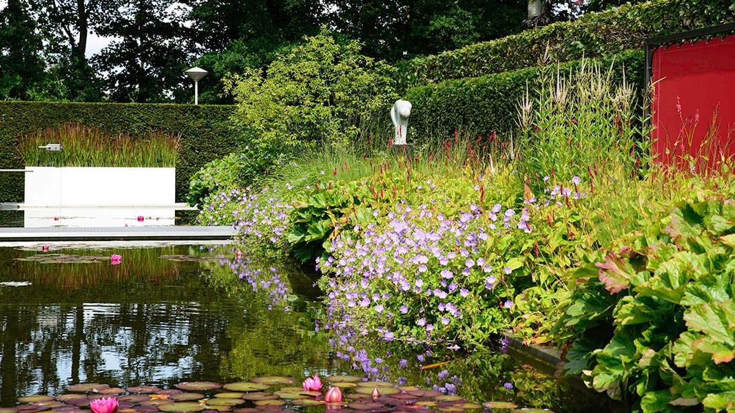 Dutch Quality Gardens Visio Vireo Vijvertuin Met Rood In De Hoofdrol In Woensdrecht 3