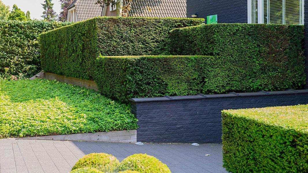 Dutch Quality Gardens Visio Vireo Vijvertuin Met Rood In De Hoofdrol In Woensdrecht 6