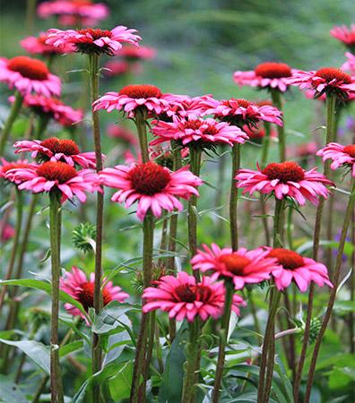 Dutch Quality Gardens Beplantingsplan