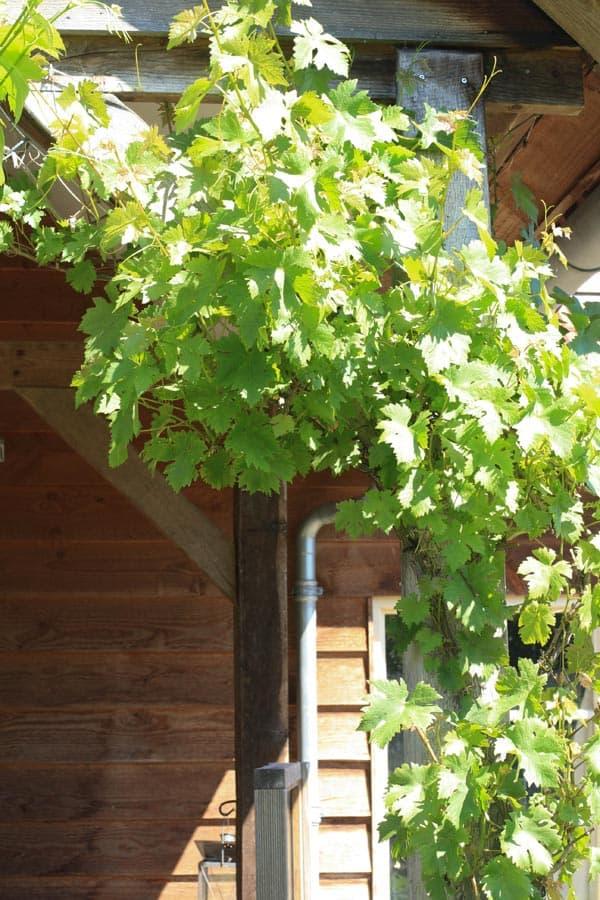 Gezinstuin Om Lekker In Te Leven Dutch Quality Gardens De Lingebrug Hoveniers 5