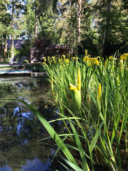 Bostuin Dutch Quality Gardens De Lingebrug Hoveniers 13