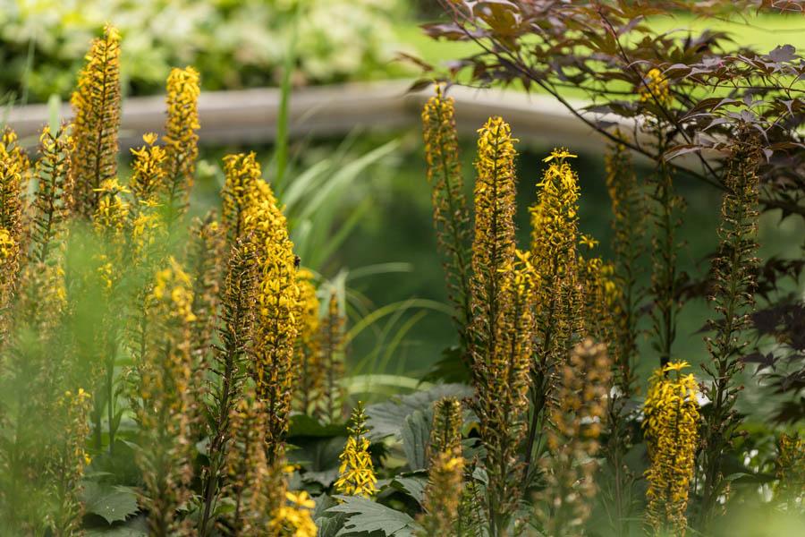 Bostuin Dutch Quality Gardens De Lingebrug Hoveniers 22