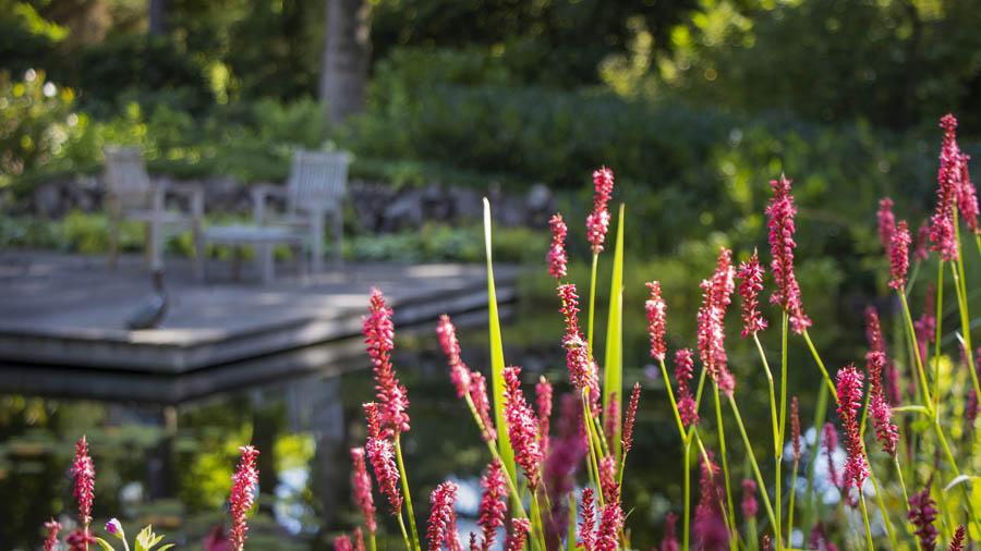 Landelijke Tuin Dutch Quality Gardens Van Ginkel Tuinen 5
