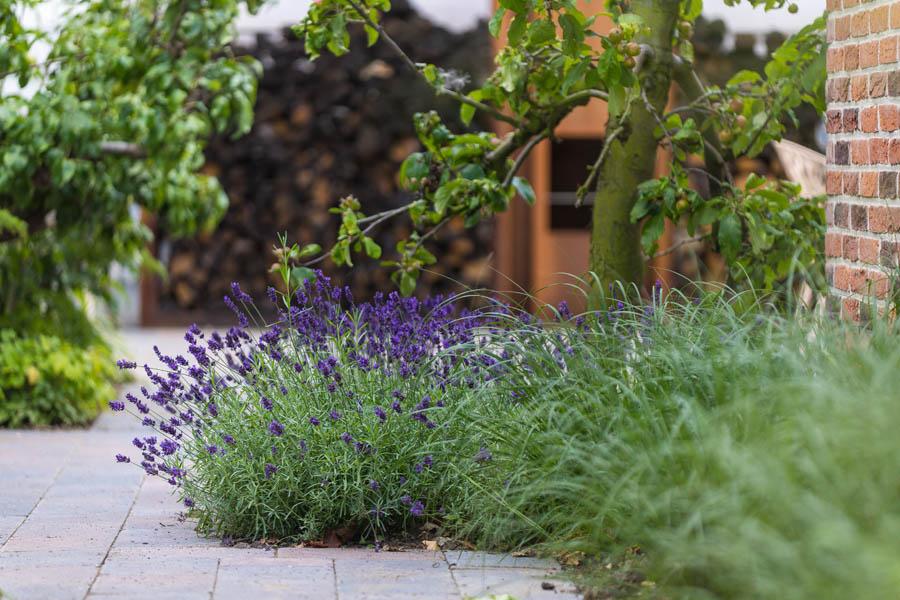 Liefde Voor Planten Vuur Dutch Quality Gardens De Lingebrug 11