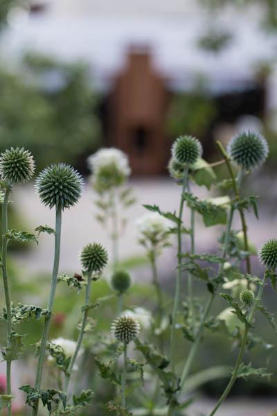Liefde Voor Planten Vuur Dutch Quality Gardens De Lingebrug 5