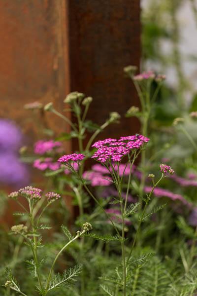Modern Strakke Binnentuin Dutch Quality Gardens De Lingebrug 15