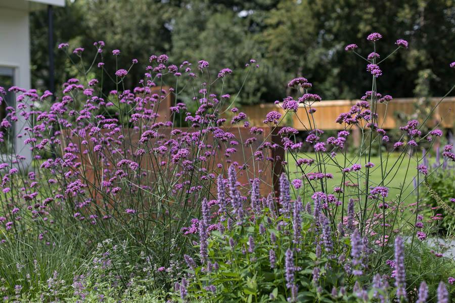 Modern Strakke Binnentuin Dutch Quality Gardens De Lingebrug 2