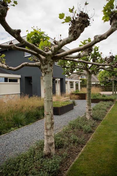 Modern Strakke Binnentuin Dutch Quality Gardens De Lingebrug 23