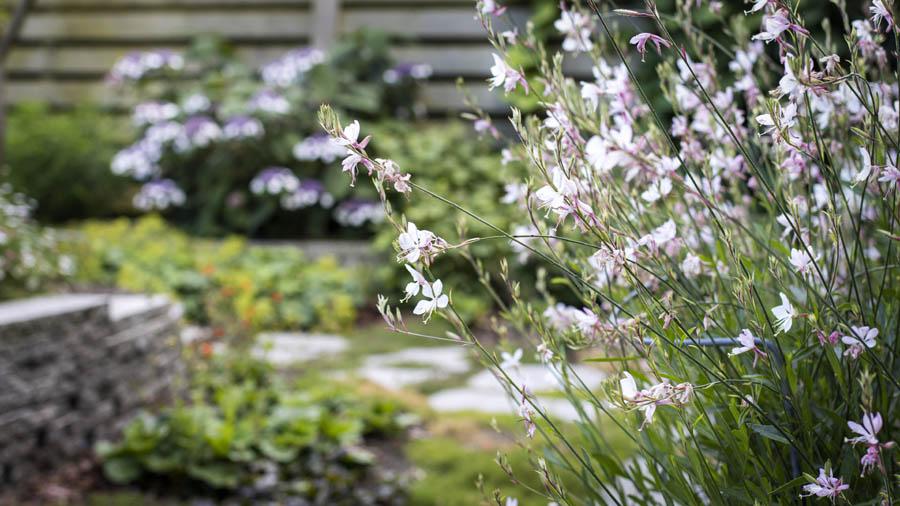 Natuurlijke Tuin Dutch Quality Gardens Van Ginkel Tuinen 2