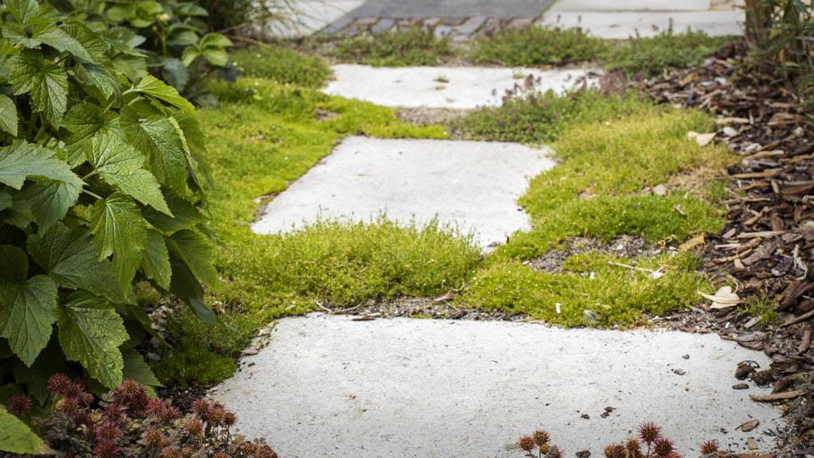Natuurlijke Tuin Dutch Quality Gardens Van Ginkel Tuinen 5