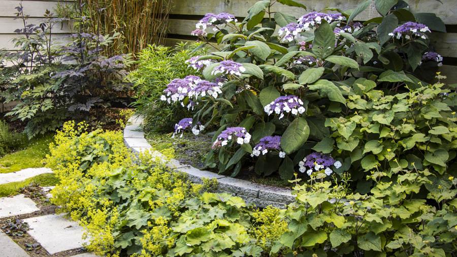 Natuurlijke Tuin Dutch Quality Gardens Van Ginkel Tuinen 6