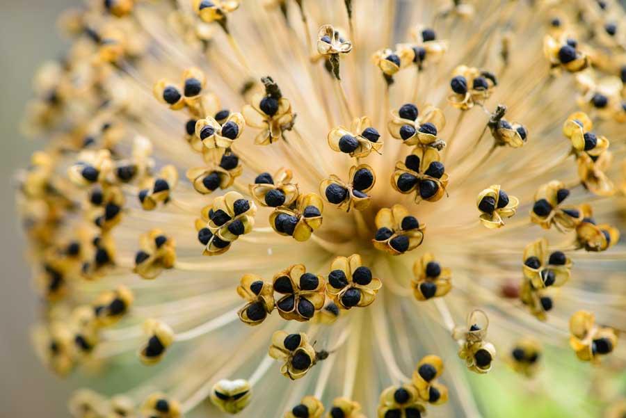 Natuurlijke Tuin Met Insectenhotel Eshuis Hoveniers 4