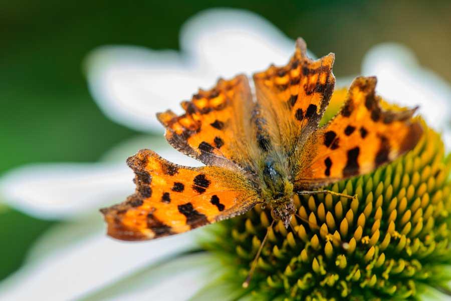 Natuurlijke Tuin Met Insectenhotel Eshuis Hoveniers 5
