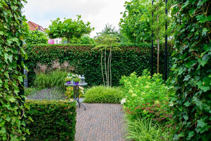 Gezellige Achtertuin In Bergen Op Zoom (2)