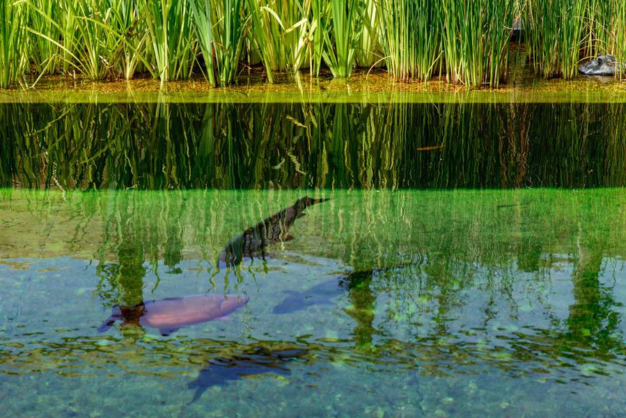 Kleine Zwemvijvertuin In Berendrecht (7)