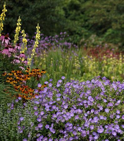 Kleurrijke Beplanting Dutch Quality Gardens