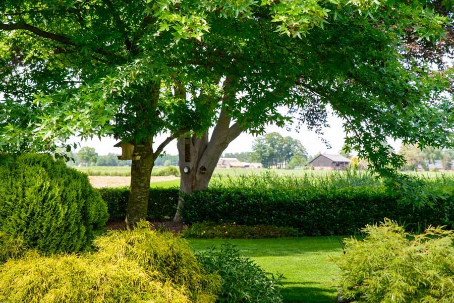 Tuinvoorbeeld Groene Tuin Met Houten Overkapping De Brinker Tuinen 8