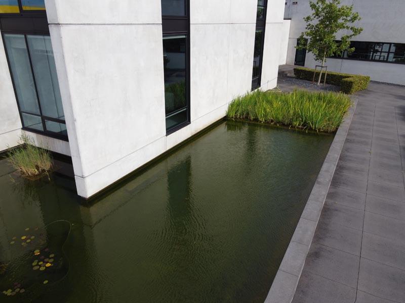 Bedrijfstuin Hitachi Dutch Quality Gardens (5)